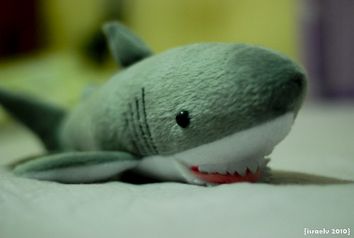 Sharkey by israelv