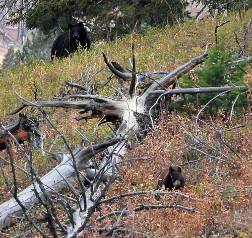 USA_167_Yellowstone_84