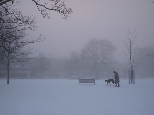 meadows in the snow and mist-3