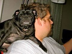 Molly likes to perch on her Dad's shoulder