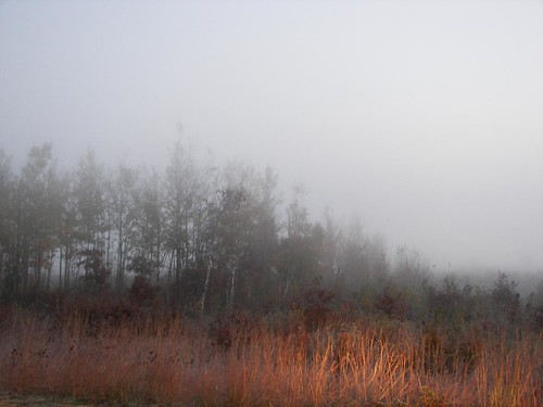 Dawn, Necedah Refuge