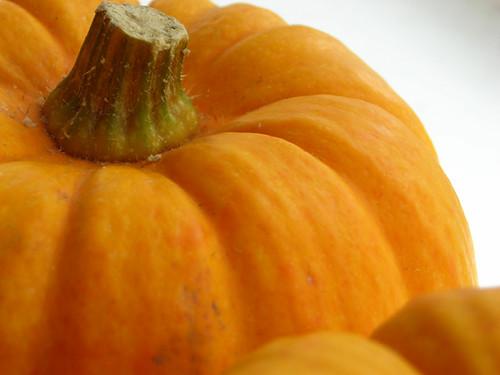Munchkin Pumpkins 001