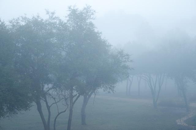 Morning mist covers the Savanna at Disney's Animal Kingdom