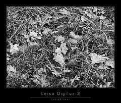 LeicaDigilux2_5