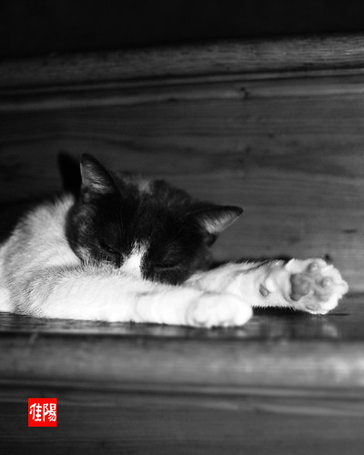 D80-ORF_SleepyCat03-2010_09-01B