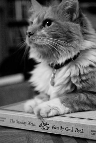 cat on a cookbook
