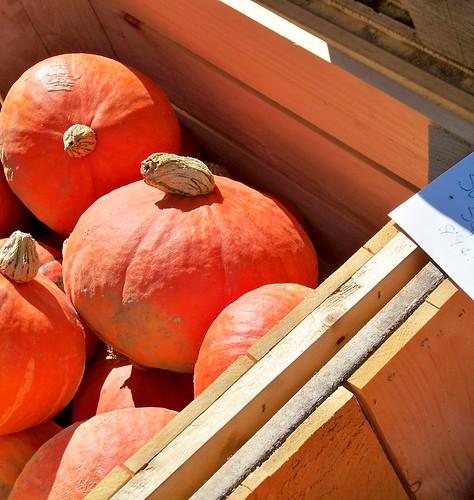 orange squash for thanksgiving