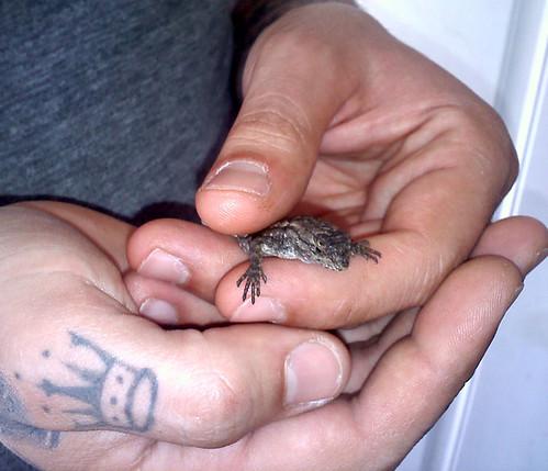 Had a Mini Dinosaur in the house