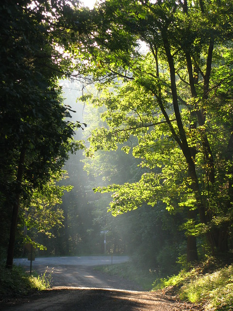 sunlight streaming, making the trees glow