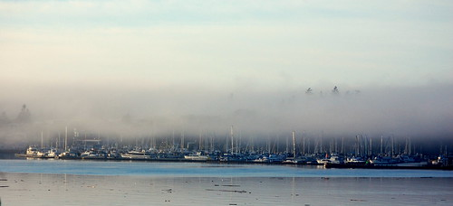 Friday Harbor fog