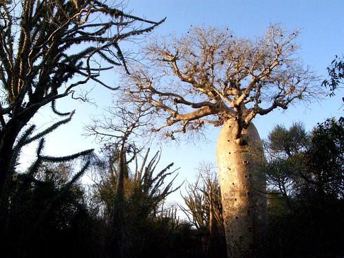 Aspecto del bosque espinoso semiárido