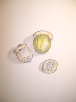 20100908_acorn3