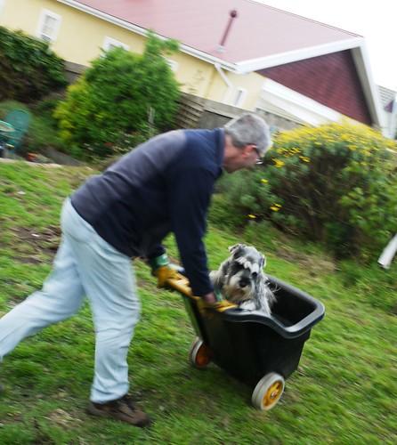 Lottie Gets a Ride in Naomi's Wheelbarrow