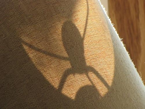 273/365 Spider?