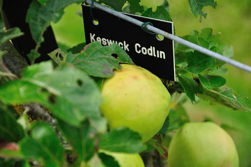 Keswick Codlin