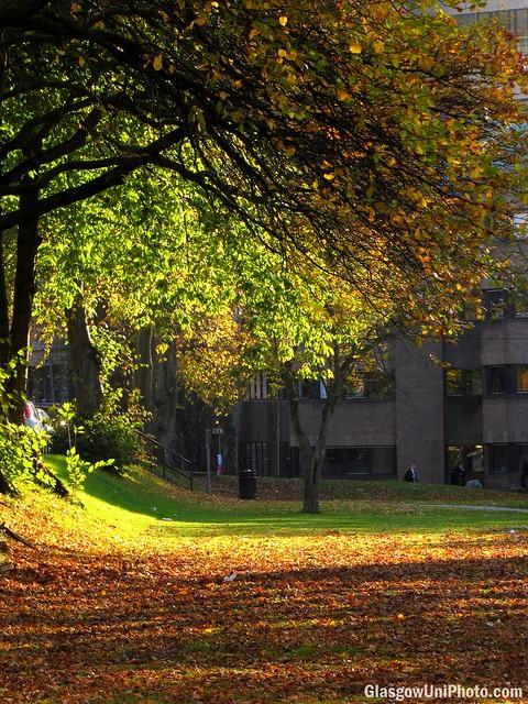 Autumn Lilybank Gardens