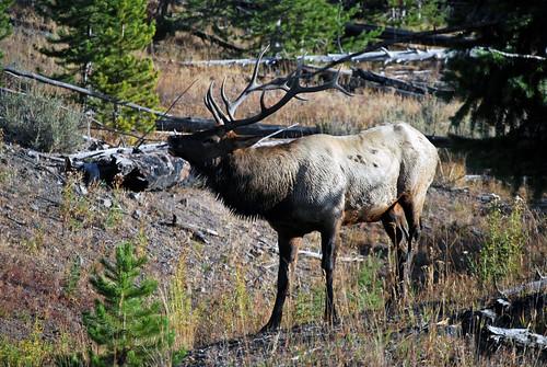 USA_197_Yellowstone_115
