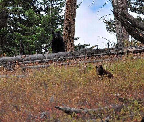 USA_172_Yellowstone_89