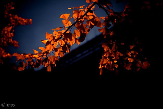 orange on black_4