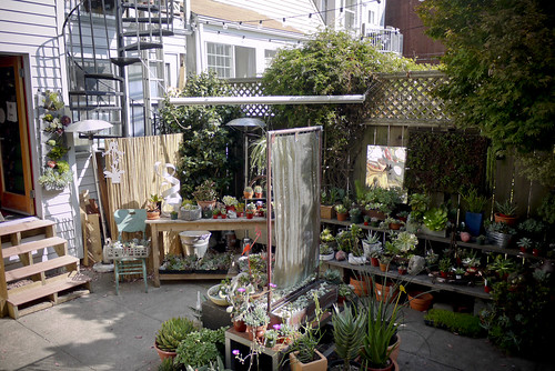 plant lover's delight at Succulence, Cortland Street, Bernal Heights, SF