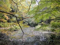Ikuta-Ryokuchi Park