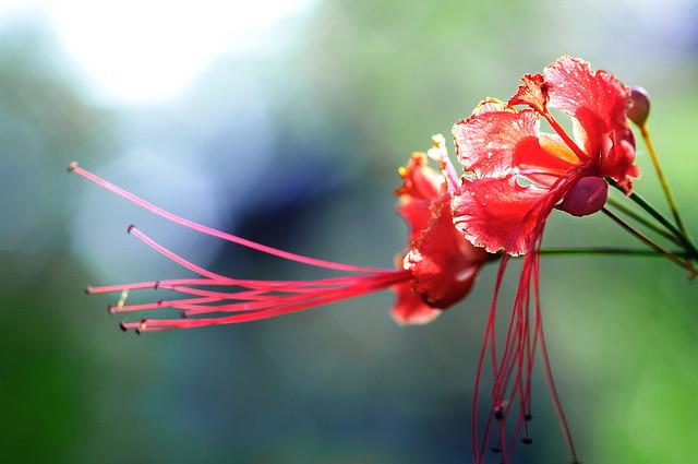 Flower: Name?