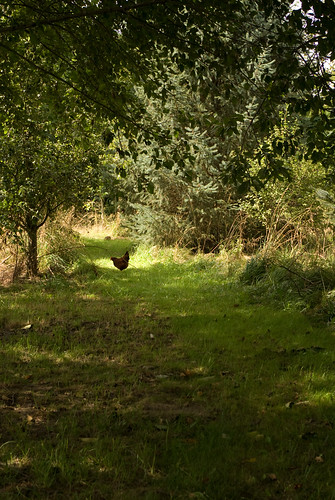 chicken paradise
