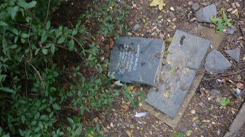 [ Darwin Plaque Vandalised in Cally Park :(( ]