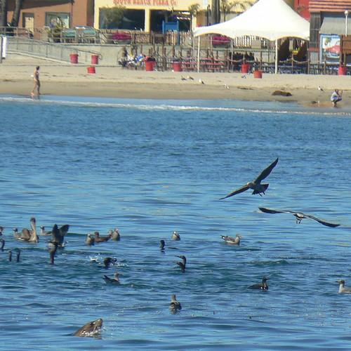 Wildlife in the bay