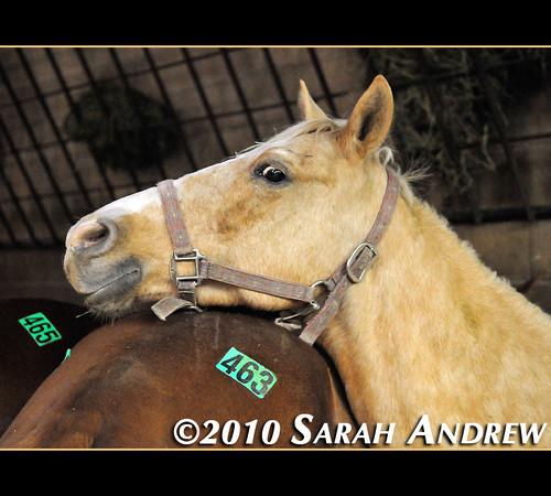 Camelot Auction