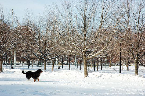 Boston Common波士頓公園21.JPG