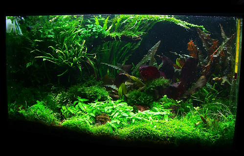 14 Feb 2 - 60l Aquascape