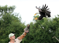 Hawk Conservancy 81