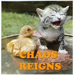 duckling and kitten reign