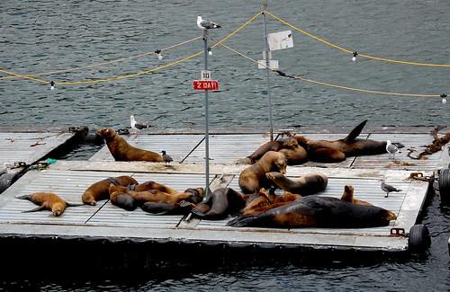 Sleepy Sea Lion Family