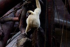 Monkey Pee Monkey Do