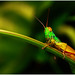 """Colorful Grasshopper • <a style=""""font-size:0.8em;"""" href=""""http://www.flickr.com/photos/8038254@N06/4873491573/"""" target=""""_blank"""">View on Flickr</a>"""