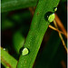 "Morning Dew • <a style=""font-size:0.8em;"" href=""http://www.flickr.com/photos/8038254@N06/4950579248/"" target=""_blank"">View on Flickr</a>"