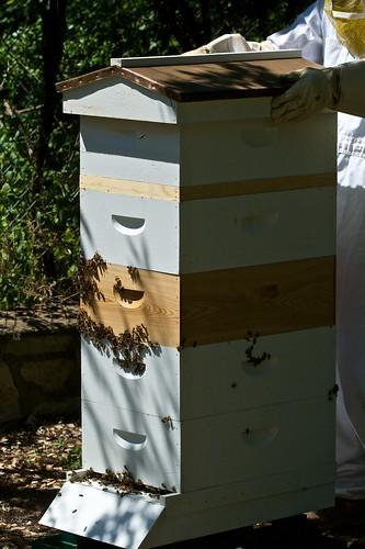 5 Super Hive