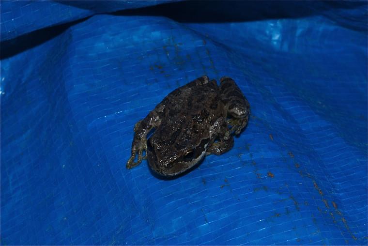 Tree frog story