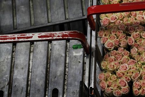 Pink Roses, Gray Steel