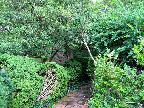 boxwood path