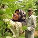 Palestinian farmers
