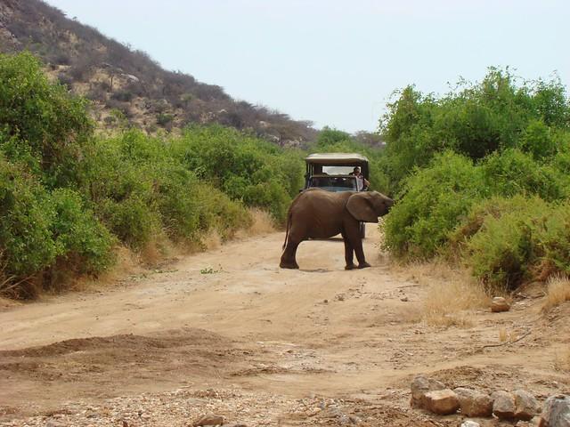 Herbivores - Samburu Game Reserve
