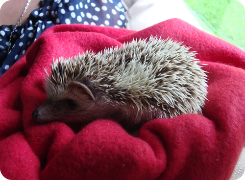 Neville the Hedgehog
