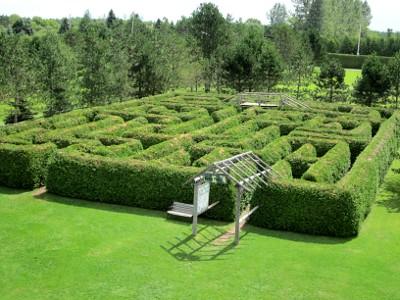 Cedar Maze