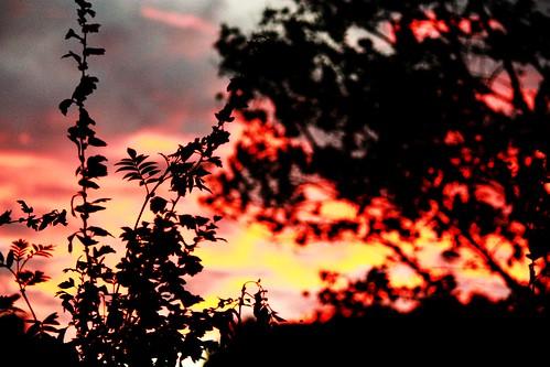 Sunset Silhouette 1