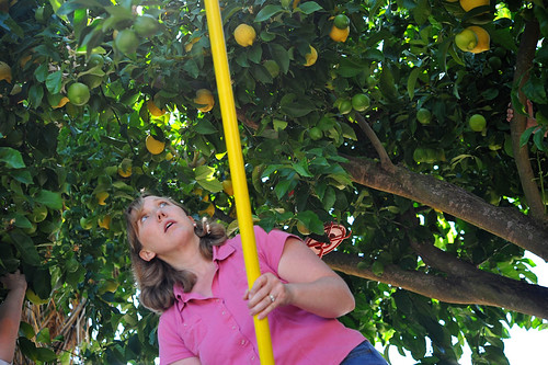 s lemon picking 3