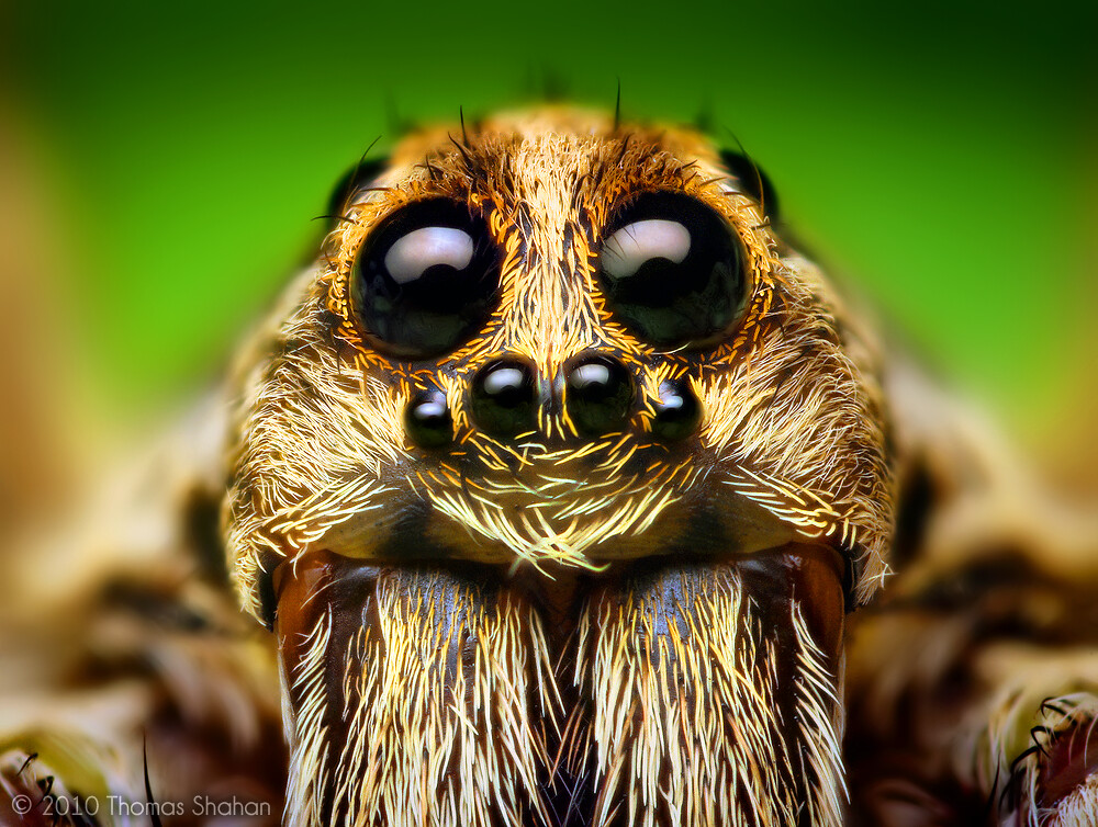 Image result for picture of a spider face