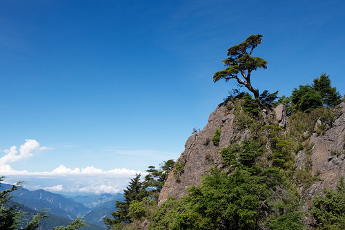 Lonely Alpine Tree